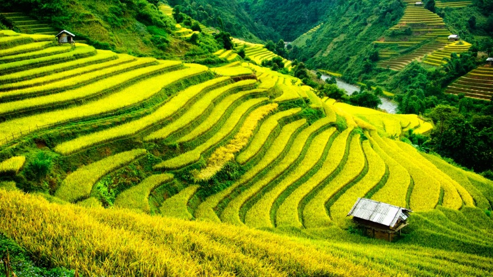 Sapa - an amazing place in Vietnam- has four different seasons in the year